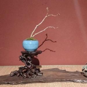 盆栽のワークショップが楽しい!「みくに園」でミニ盆栽作りを体験してきました ~三国町~