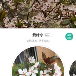 花の名前を知りたい時に使うアプリ「形色」