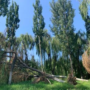 本日、これまで以上の暴雨につきin京津冀(北京、天津、河北)
