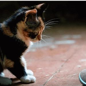飼い主がいなくても猫の遊び相手に困らない「ネコのおもちゃボール」とは