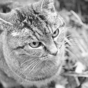 猫がオリンピックに出ると、金メダルが取れるか本気で考えてみた!