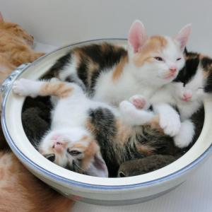 猫のニャンモナイトの寝相にはどんな意味があるのか?気持ちを考えてみた