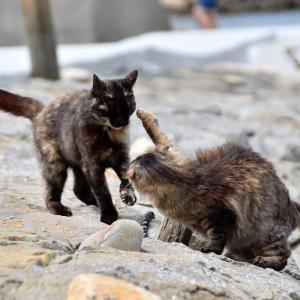 猫パンチの威力を知らないと、猫の魅力も半減!?元ボクサー具志堅も驚くスピード