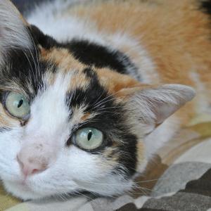 猫の歯周病の原因と症状とは?治療法と歯磨きの仕方、歯磨きできない場合の対処法について