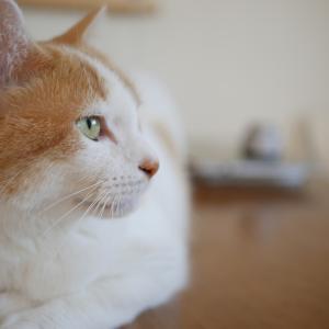 猫カフェとは?初めての人が猫カフェ優良店を選ぶのポイント3つ紹介!清潔・猫目線・猫ファーストがキーワード