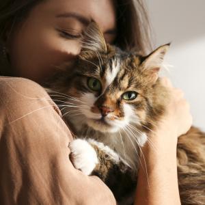 猫の結膜炎とは?目ヤニがうまく取れない、目ヤニの取り方と目薬点眼のコツ!