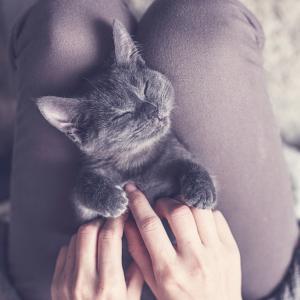 【猫カフェ】完全ガイド② 日本で大人気の猫カフェ。でも実は発祥は…?!