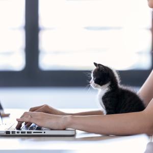 【猫カフェ】完全ガイド③ 猫カフェの飲食スタイルは3つ、入店から退店までのお店の制度や料金システムを解説