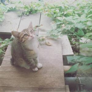 猫カフェのバイトってどんな仕事なの「メリットは?やりがいは?」その内容(完全ガイド⑩)