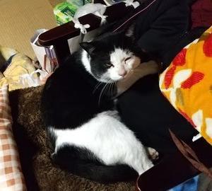 母の膝の上でくつろぐ愛猫。