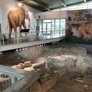 マンモスの化石発掘現場がミュージアムに ~ドライブ to Waco~
