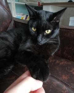 黒猫とかぎしっぽ