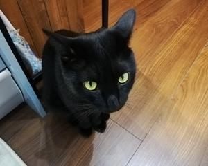 猫とてんとう虫