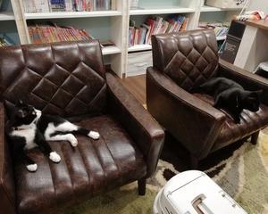 猫はいたずら好き お気に入りのソファーの下で