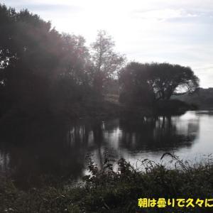 10月18日 越辺川 効率が良過ぎる釣行