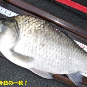 10月31日 市野川 外道祭り釣行