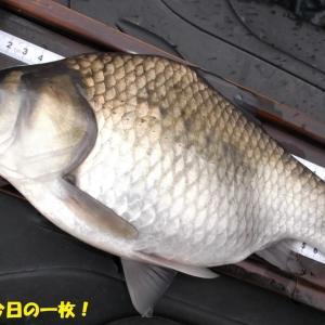 3月20日 市野川 最長不倒9時間釣行