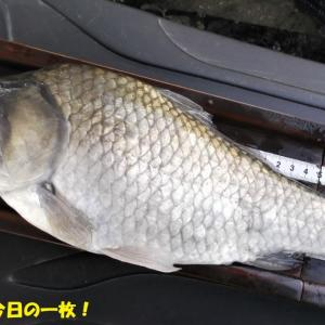9月23日 越辺川 欠点露呈釣行