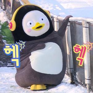 今、韓国で人気のペンギンとは??