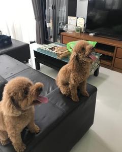 姉御犬来訪
