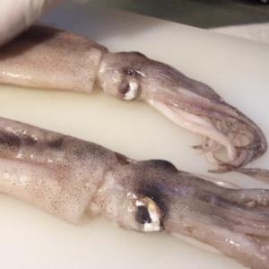 コストコ冷凍イカ姿を解凍、捌いてみた。