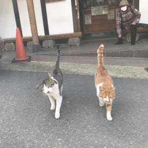 鳴子温泉の猫さん
