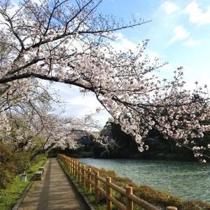 【京都】『長岡天満宮』に行ってきました。 京都観光 京都旅行 国内旅行 社寺めぐり 京都桜