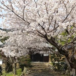 【京都】【御朱印】『勝持寺』に行ってきました。京都観光  京都旅行 国内旅行 御朱印集め 社寺めぐり