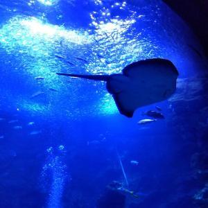 【京都】梅小路公園 『京都水族館』に行ってきました~その2  京都観光 京都旅行 国内旅行  主婦ブログ