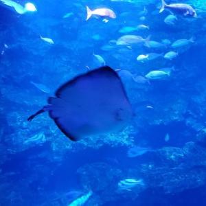 【京都】梅小路公園 『京都水族館』に行ってきました~その1  京都観光 京都旅行 国内旅行  主婦ブログ