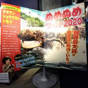 【京都】梅小路公園、『京都水族館』に行ってきました。京都観光 京都旅行 国内旅行 女子旅