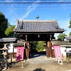 【京都】【御朱印】泉涌寺塔頭『即成院』に行ってきました。京都観光 京都旅行 女子旅 主婦ブログ