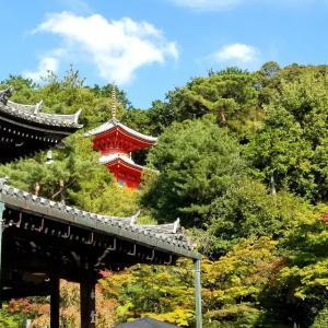 【京都】【御朱印】泉涌寺塔頭『今熊野観音寺』に行ってきました。京都観光 京都旅行 女子旅 主婦ブログ