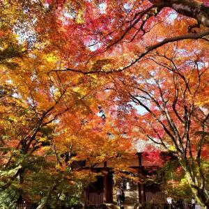 【京都】【御朱印】嵐山『常寂光寺』き行ってきました。 京都観光 京都旅行 女子旅 主婦ブログ