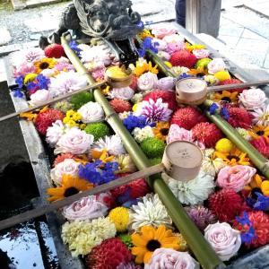 【京都】柳谷観音(楊谷寺)に行ってきました~京都旅行 京都観光 女子旅 主婦ブログ