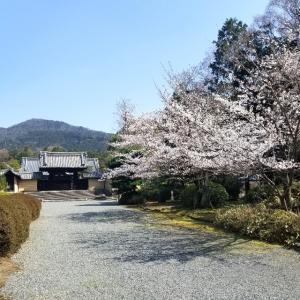 【京都】【御朱印】『随心院』に行ってきました。 京都旅行 京都観光 女子旅 主婦ブログ 京都桜