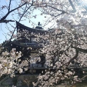 【京都】『勧修寺』に行ってきました。 京都観光 京都旅行 女子旅 主婦ブログ