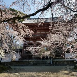 【京都】【御朱印】『醍醐寺』に行ってきました。京都旅行 京都桜 京都旅行 女子旅
