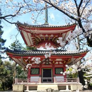 【京都】【御朱印】『知恩院』に行ってきました。 京都桜 京都観光 京都旅行 女子旅