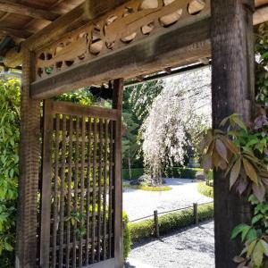 【京都】【御朱印】妙心寺塔頭、『退蔵院』に行ってきました。 京都観光 京都旅行 京都桜 女子旅