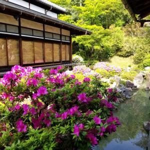 【京都】【御朱印】『智積院』に行ってきました。 京都観光 京都旅行 女子旅 旅気分