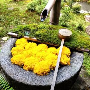 【京都】【御朱印】『柳谷観音(楊谷寺)』に行ってきました。 京都観光 花手水 あじさい 京都旅行