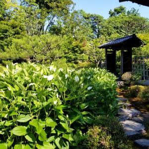 【京都】建仁寺塔頭『両足院』に行ってきました。 京都旅行 京都観光 女子旅 主婦ブログ