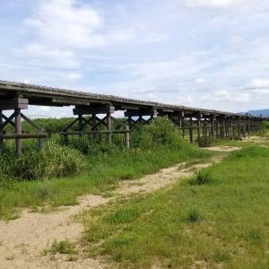 【京都】八幡、『流れ橋(上津屋橋)に行ってきました。』 京都観光 女子旅 そうだ京都行こう