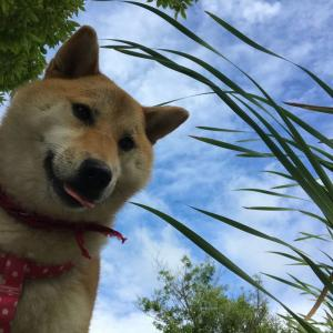 【写真記事】またまた井原リフレッシュ公園に行きました【岡山県】