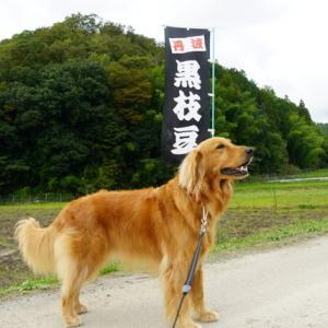10月後半〜じゃがくん・鞍馬寺・ハロウィン〜