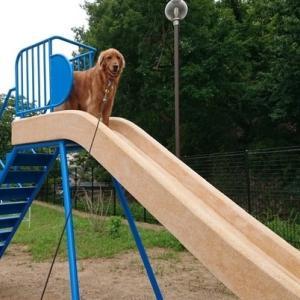 モア、おニューの滑り台に初登頂!