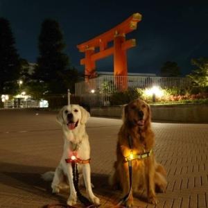 京の夜さんぽ②〜美術館の庭園へ〜
