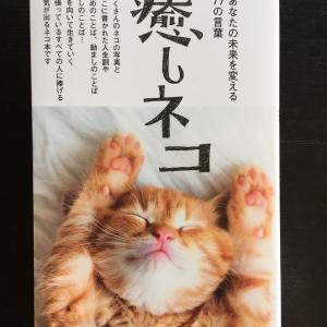 癒しネコ。