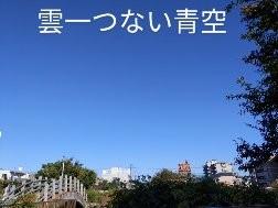 お天気いいので、久しぶりに公園に行きました。